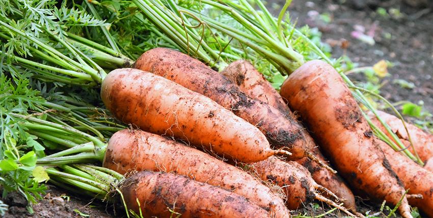 有機野菜の魅力